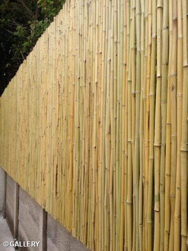 Nurv Projects Nurv Projects Bamboo